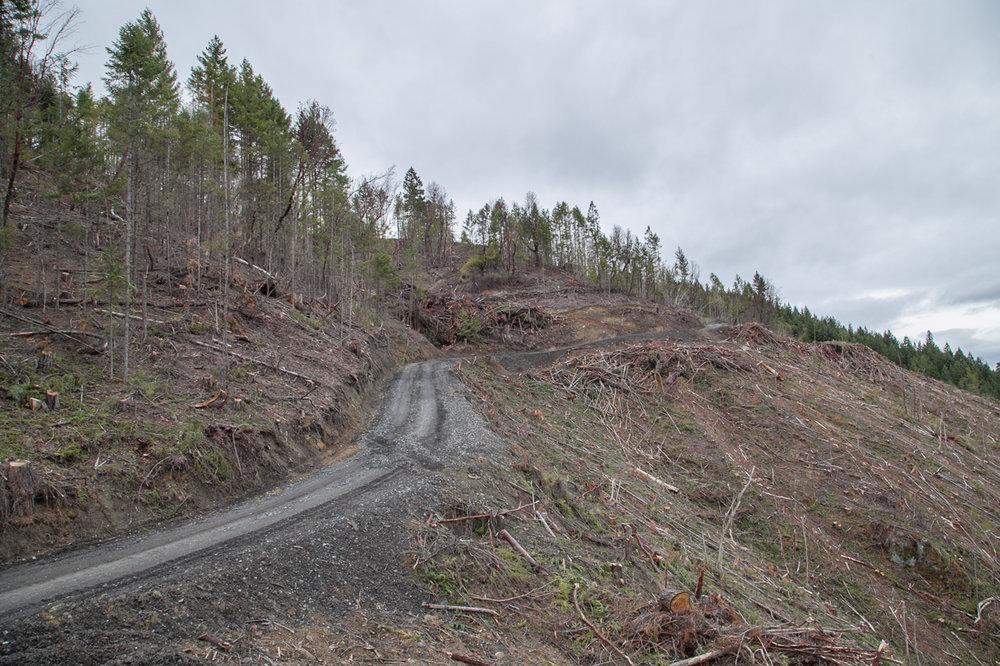 Logging Box Canyon, David Christian.jpg