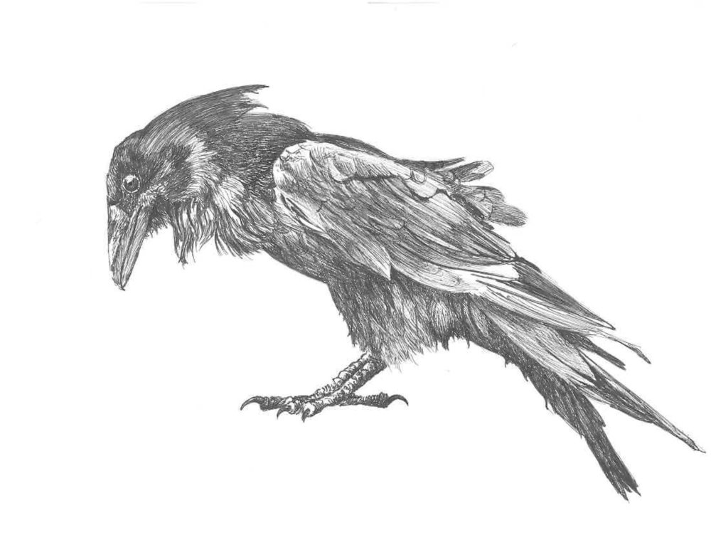 The Crone's Crow by Thomas Montague, Ithaca New York