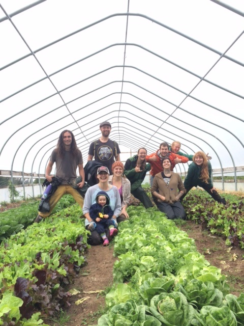 - Work Traders:  Each year we trade five small CSA shares for individuals willing to commit to a four hour shift each week. Work traders are responsible for a large portion of the weeding that takes place in the fields.  We LOVE our work traders.