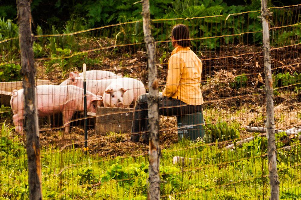 allison 2016 pigs farm (1 of 1).jpg