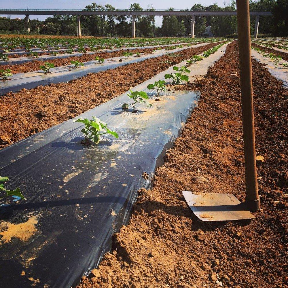 Junho17 - Campo Cultivo (1).JPG
