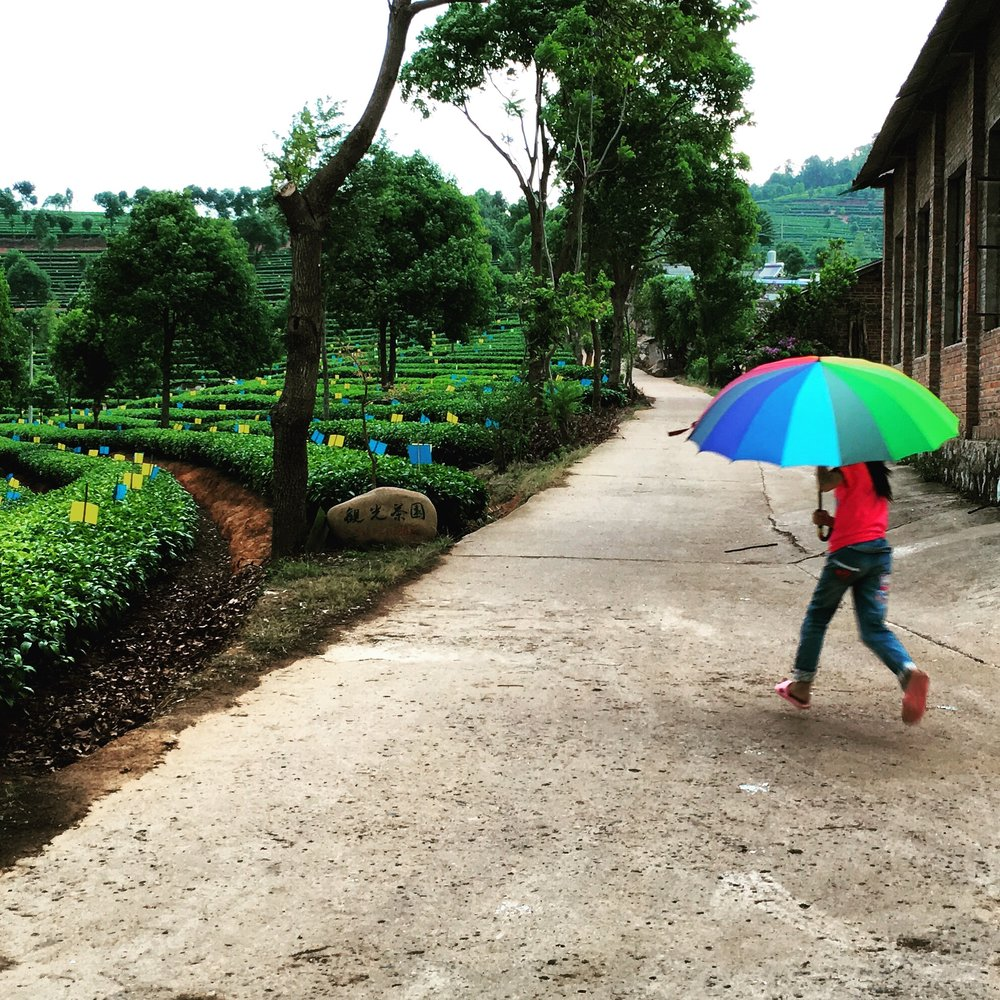 Running in the Rain, Puer City.JPG