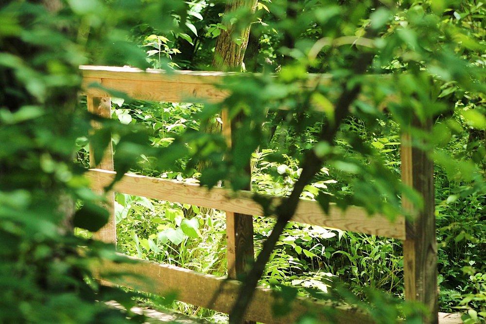 Parkville Nature Sanctuary.JPG