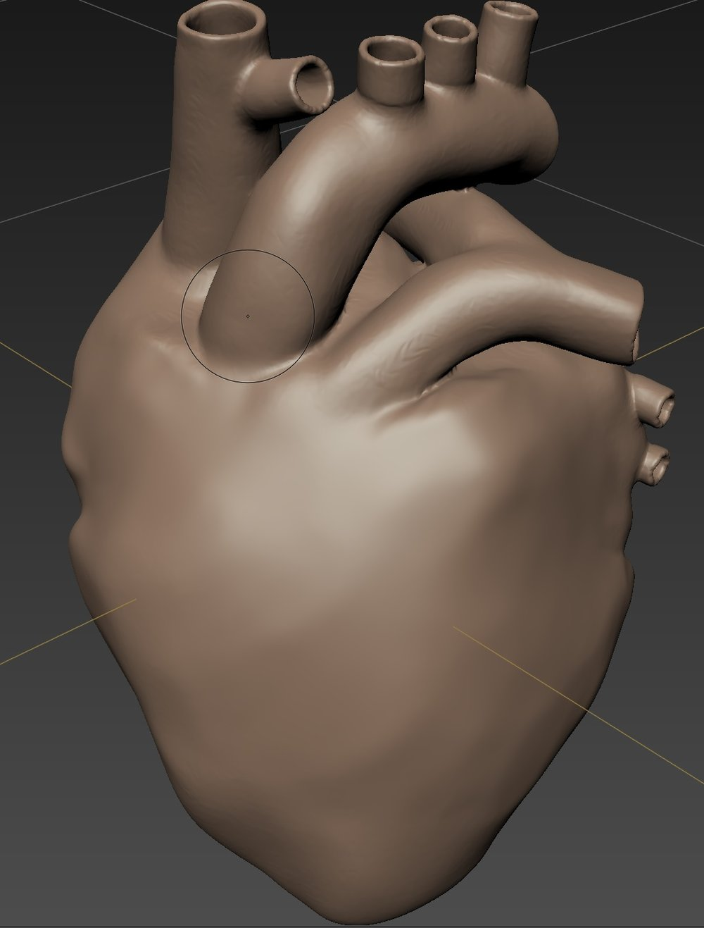 3D heart model rendered without veins.jpg