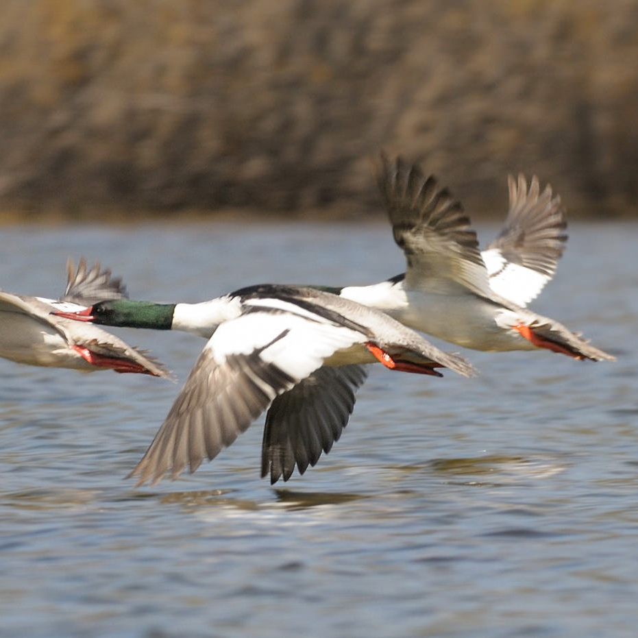 5 - Van Norden is one of the best Sierra birding areas, featuring more than 100 species.