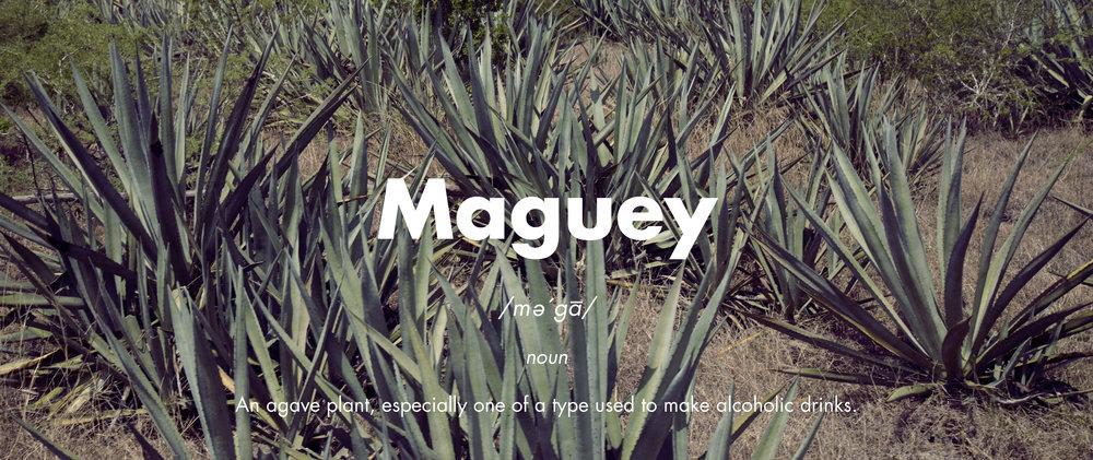 Maguey El Tinieblo