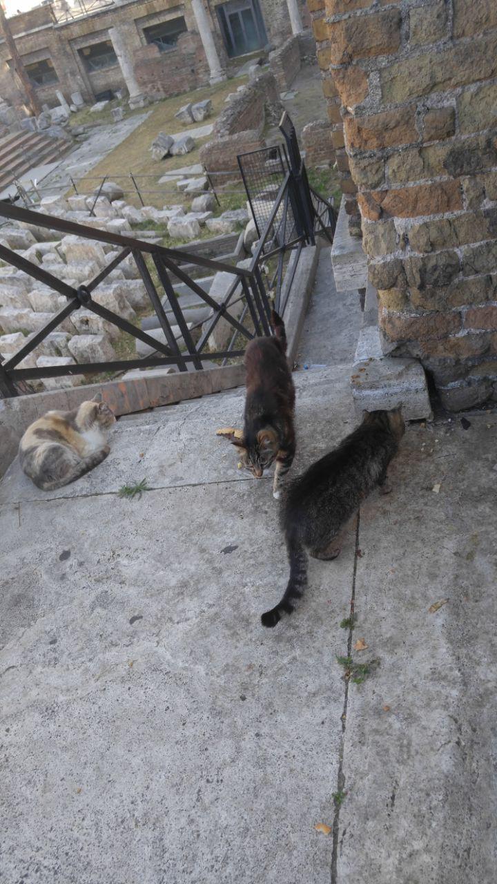 caesarncats.jpg