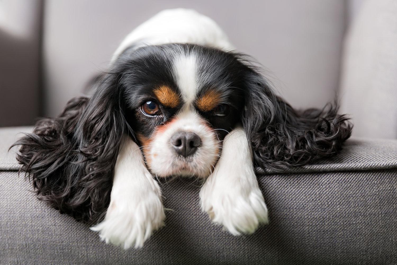 The Fluffy Ruff Dog Spa