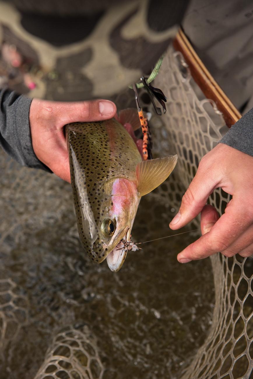 Skwala hatch on Bitterroot River Montana