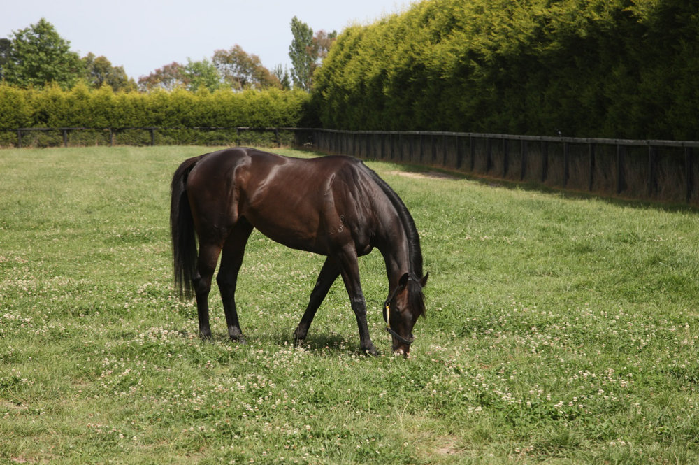 Viewed spelling in his paddock after his 2008 Melbourne Cup victory