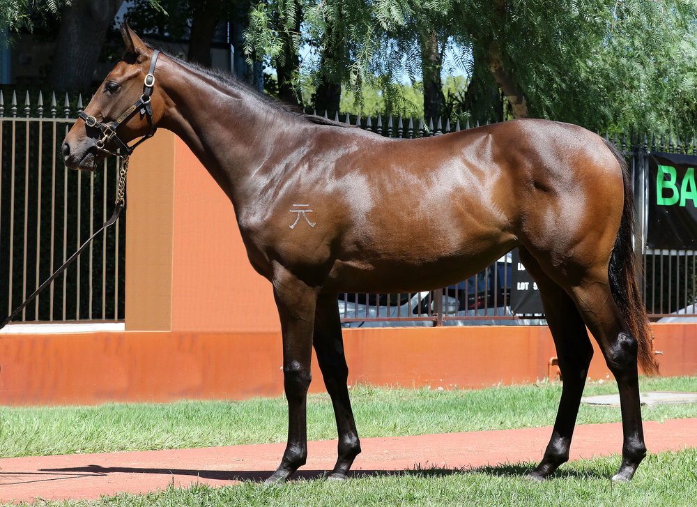 Lot 163  Filly Eurozone x Quick Thinking, by Starcraft - From a daughter of Group I New Zealand Oaks runner-up Sursum Corda, a full sister to Group I winners St Reims and Champagne. From the family of current stakes-winners Imposing Lass and Charmont.