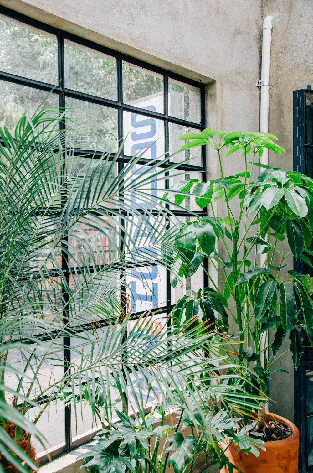 Squash73-plants.jpg