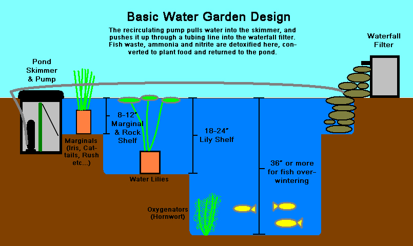 pond_diagram copy.jpg