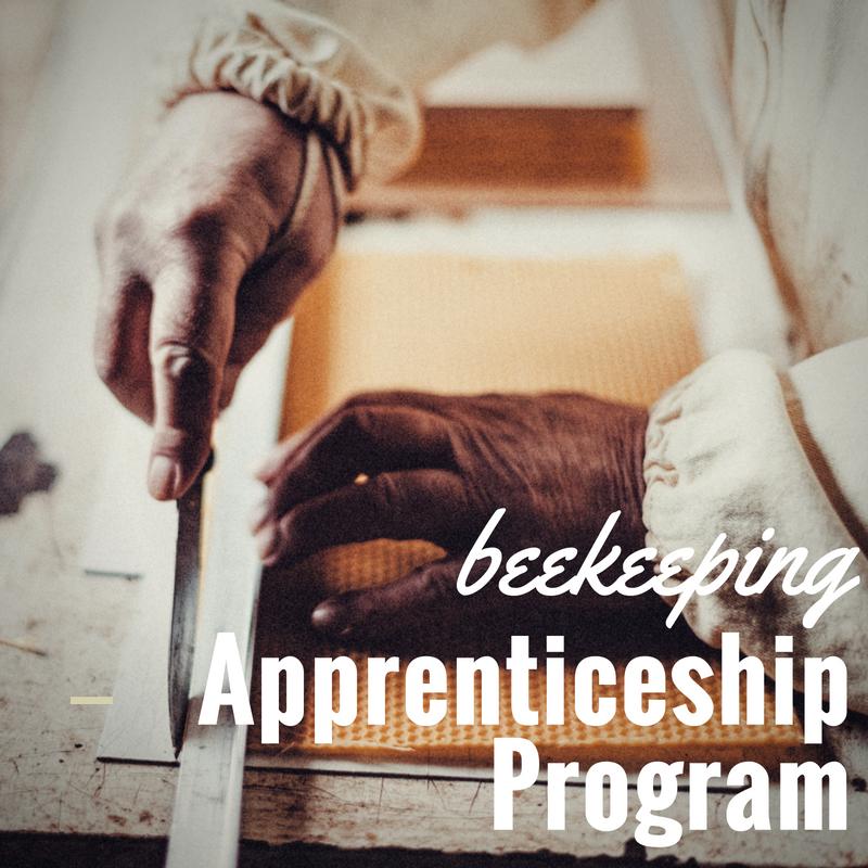 apprenticeship.png