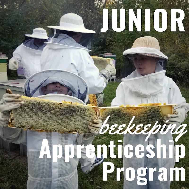 junior apprenticeship.png