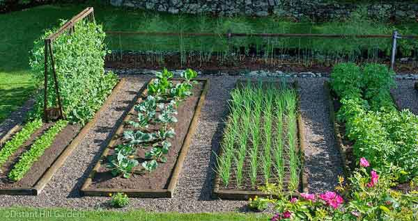 sample sectional veg garden.jpg