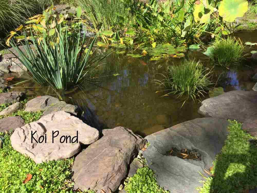 20-Pond.jpg