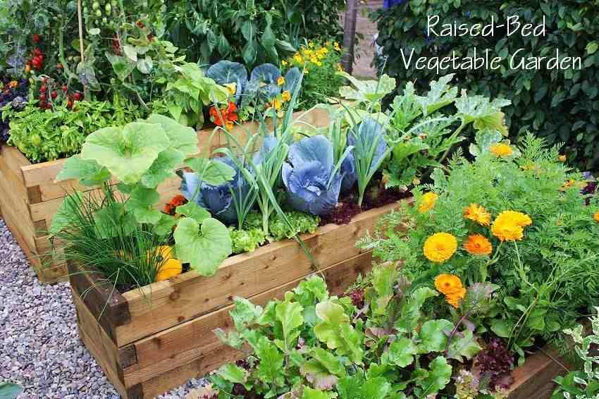 23-Veg garden.jpg
