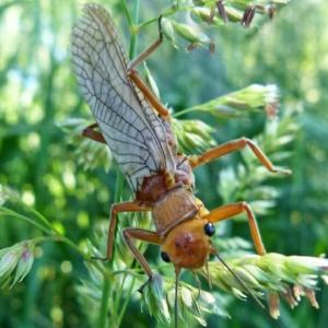 Bug photo.jpg