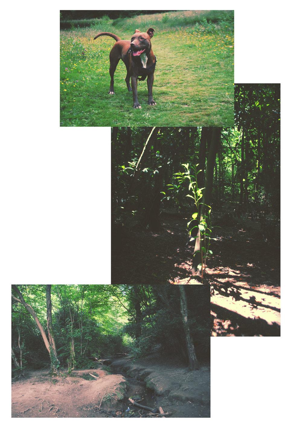 st-helens-woods-1