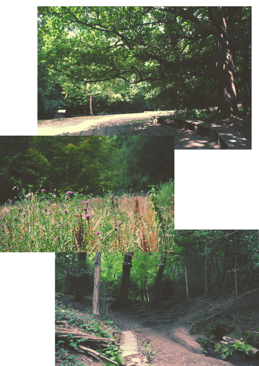 st-helens-woods-2