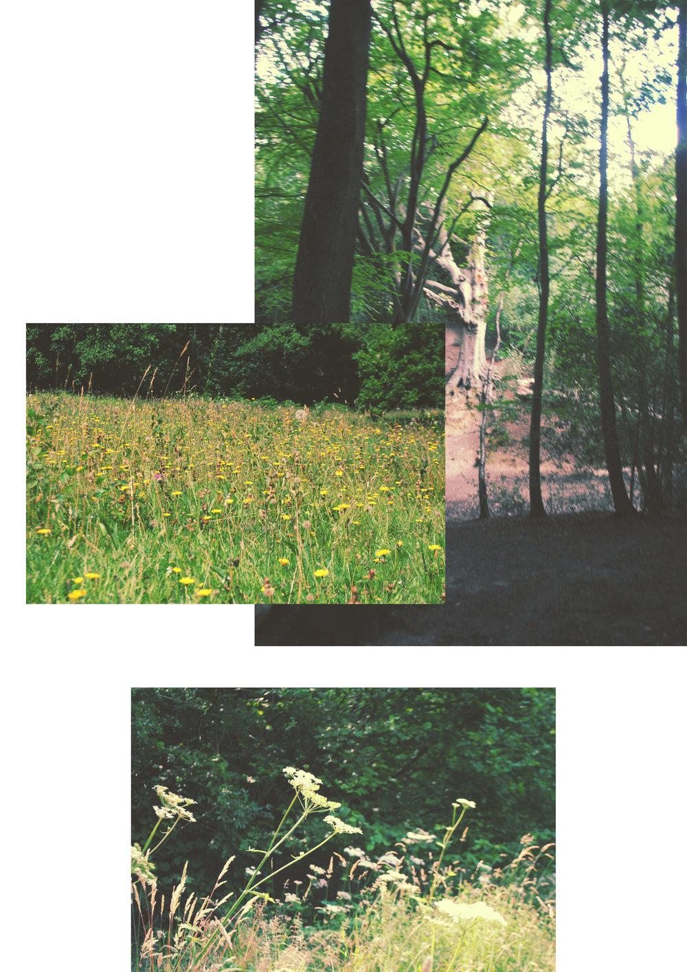 st-helens-woods-3