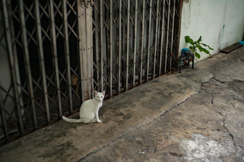 August 2016, Bangkok (กรุงเทพมหานคร), Kingdom of Thailand (ราชอาณาจักรไทย).Them there eyes…