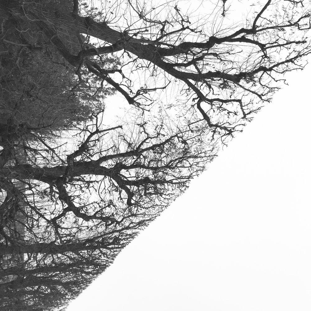 IMG_bomen.jpg