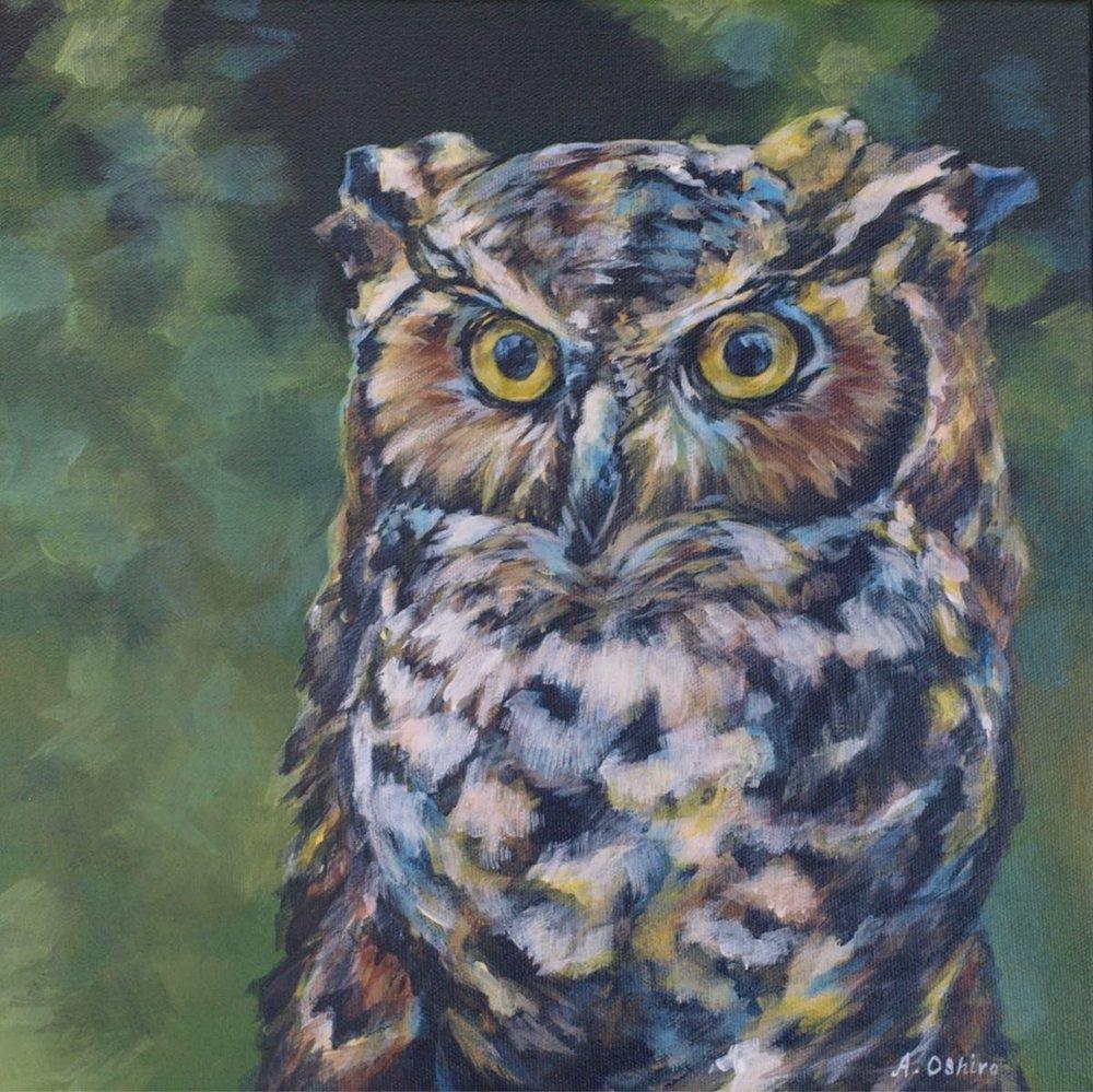 'owl', Acrylic Painting of owl close up, by Ashley Oshiro, Calgary, Alberta, Local Fine Artist, Original Art