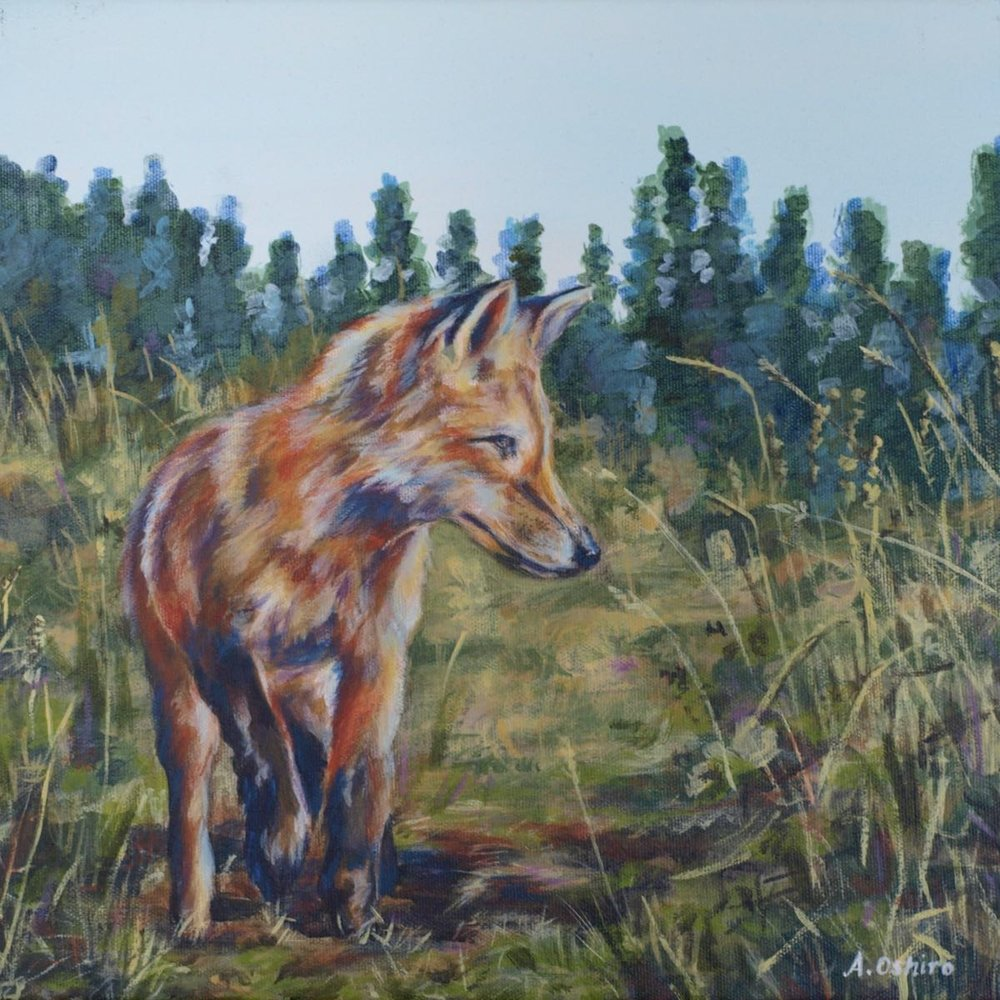 'Baby Fox', Acrylic Painting of Baby fox in grass with forest in background, by Ashley Oshiro, Calgary, Alberta, Local Fine Artist, Original Art