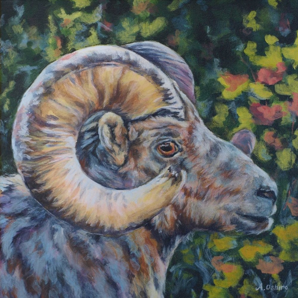 'Big Horn Sheep', Acrylic Painting of big horn sheep profile, close up, by Ashley Oshiro, Calgary, Alberta, Local Fine Artist, Original Art