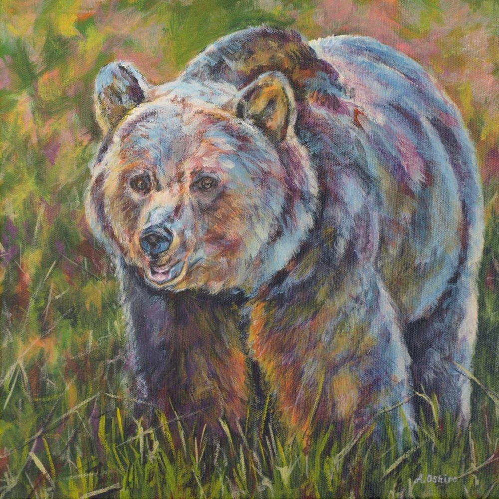 'Grizzly Bear', Acrylic Painting of Grizzly bear in grass, by Ashley Oshiro, Calgary, Alberta, Local Fine Artist, Original Art