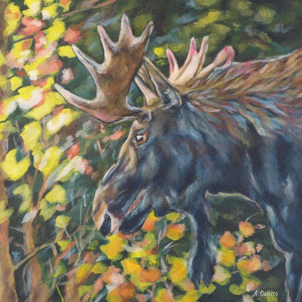 'Bull Moose', Acrylic Painting of bull moose profile, close up, by Ashley Oshiro, Calgary, Alberta, Local Fine Artist, Original Art