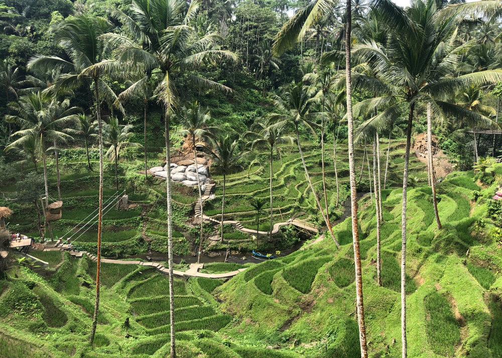 Rice Terrace Tegalalang, Bali