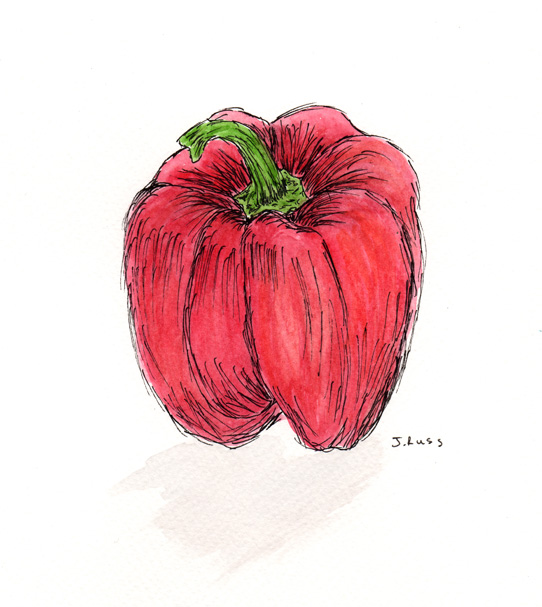 """Pen and watercolor. """"Red Pepper"""" March 2017. Prints available. Copyright 2017 Jennifer Russ, All Rights Reserved."""