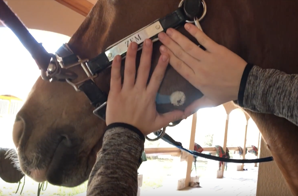 Treat Summer Sores - How to treat summer sores on your horse with COAT DEFENSE®.