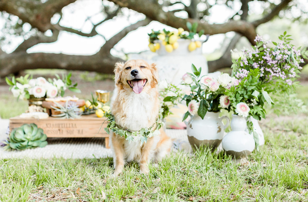 Boho Mommy and Me Floral Crown  Pottery Barn Blush Family Joy Plus Love Styled Shoot dog wreath