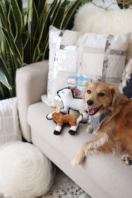 Joyfullygreen Gordman's National Pet Day Baby and Puppy Love-02.jpg
