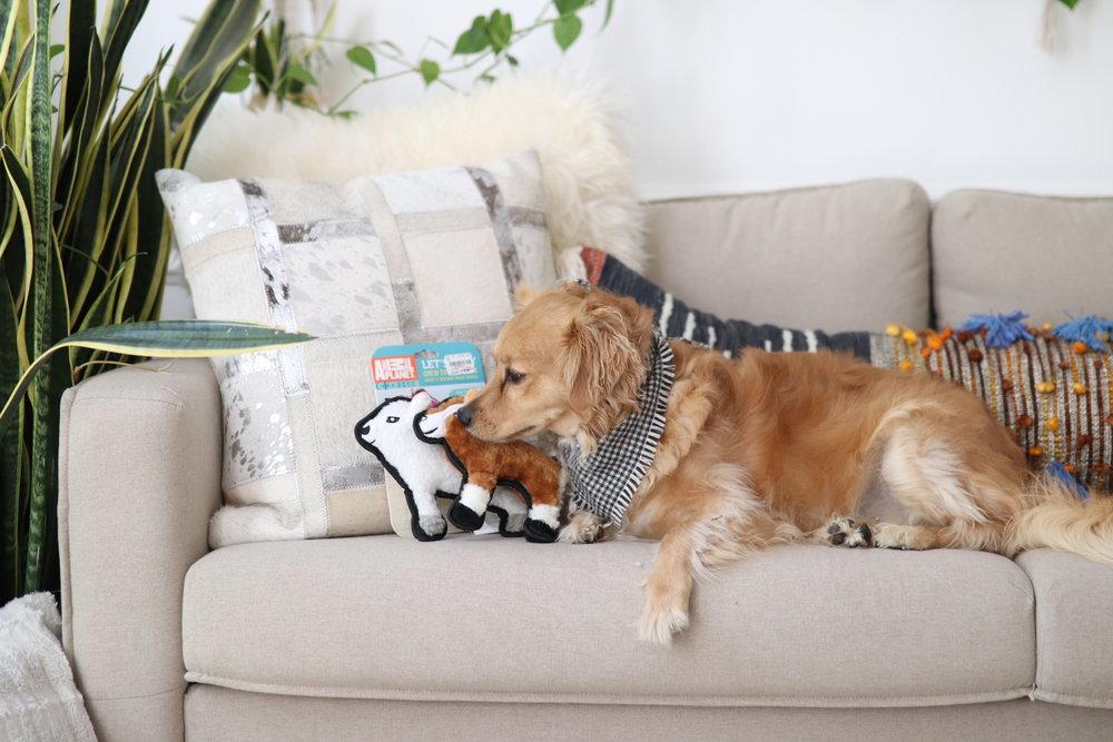 Joyfullygreen Gordman's National Pet Day Baby and Puppy Love-01.jpg