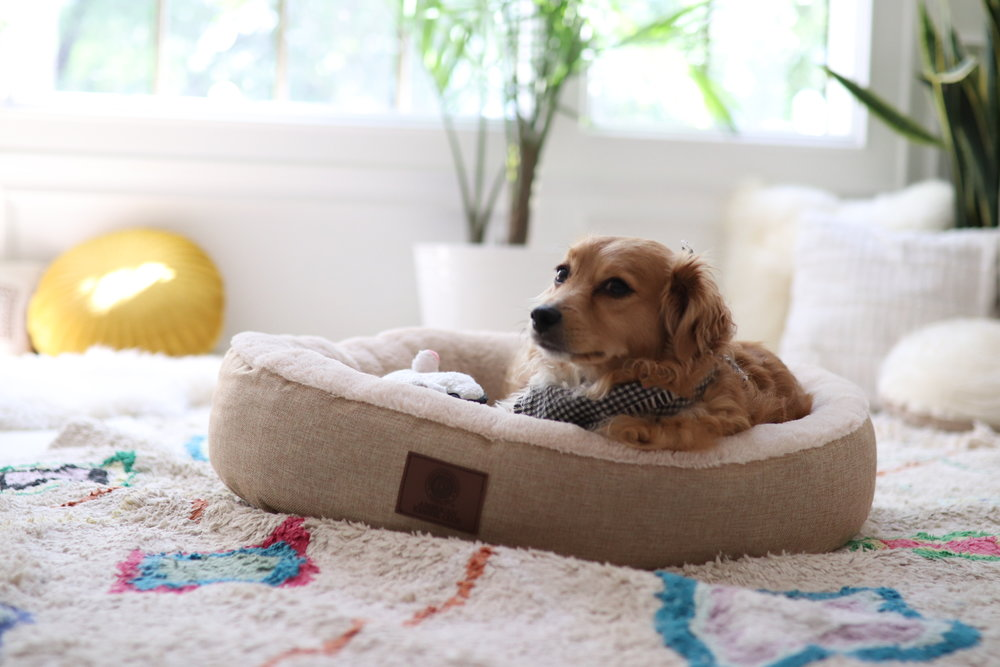 Joyfullygreen Gordman's National Pet Day Baby and Puppy Love-11.jpg