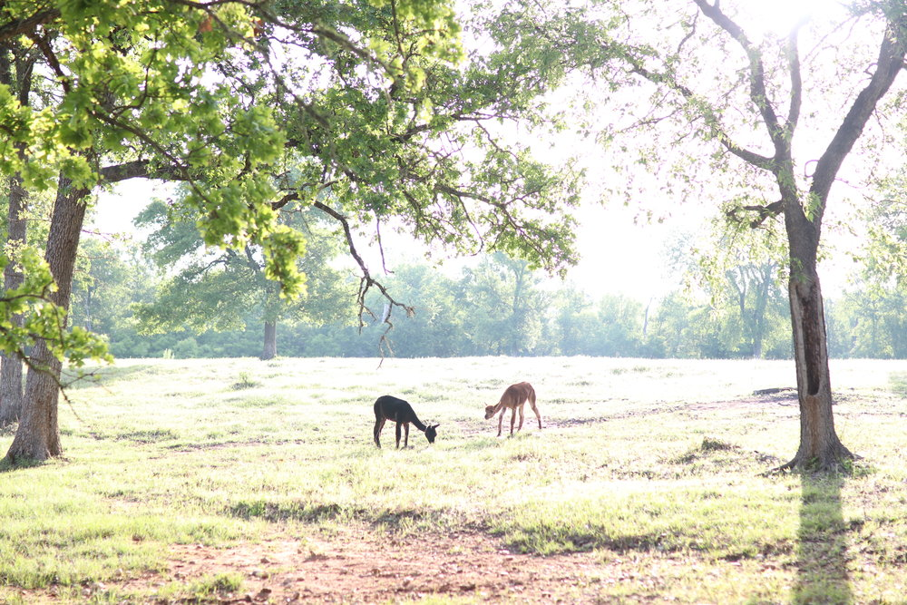 Green Acres Austin Glamping with Toddler Animal Farm