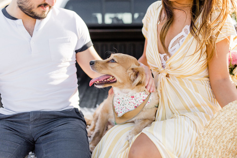 National Dog Day 3 Things to know when Adopting A Puppy 5 best cars for dogs
