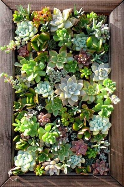 Vertical succulent garden in box
