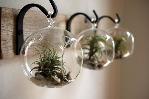 Hooks and air plants in glass terrarium