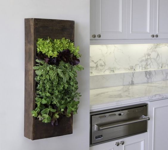 Kitchen wall herb garden.