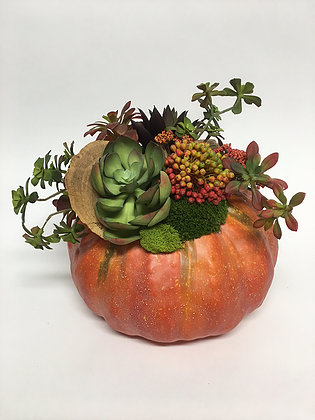 succulents in pumpkin container