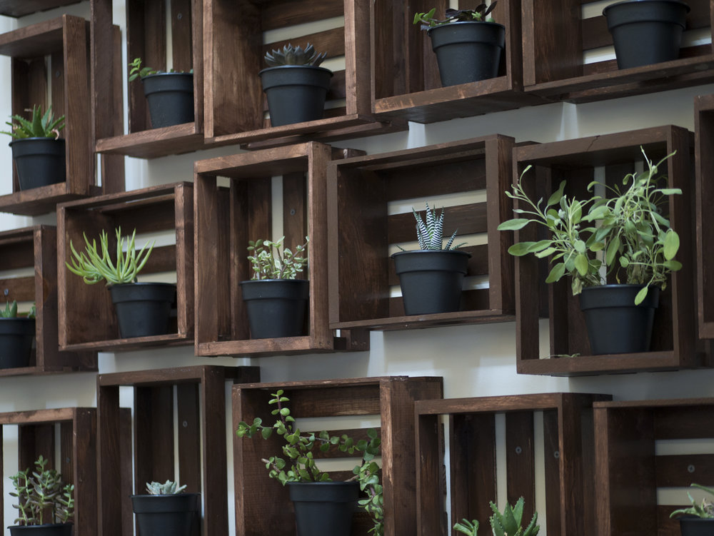 succulents in crate boxes as wall decor - Tiffany Lee Ann Design
