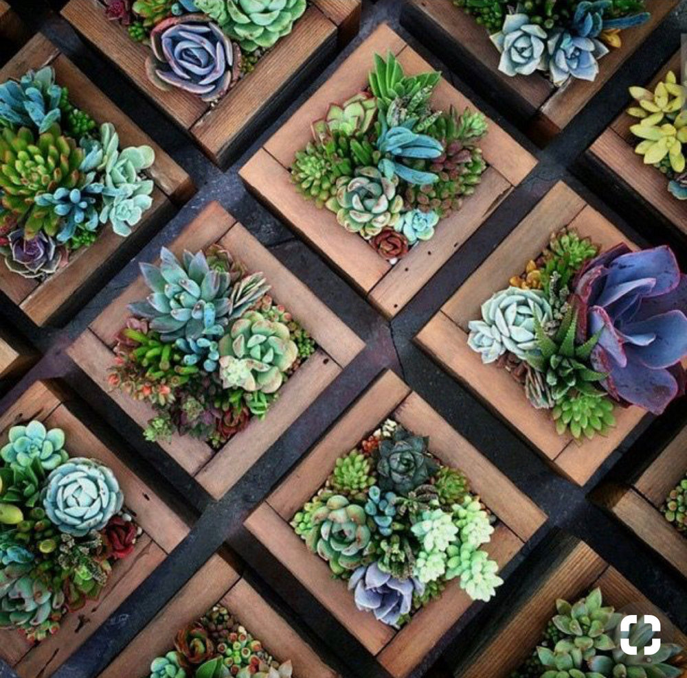 Love these succulent wall decor we are making at our workshop January 20th! Check home page for event information.