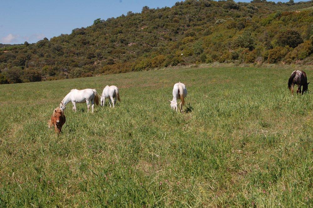 caballos guara 3.jpg