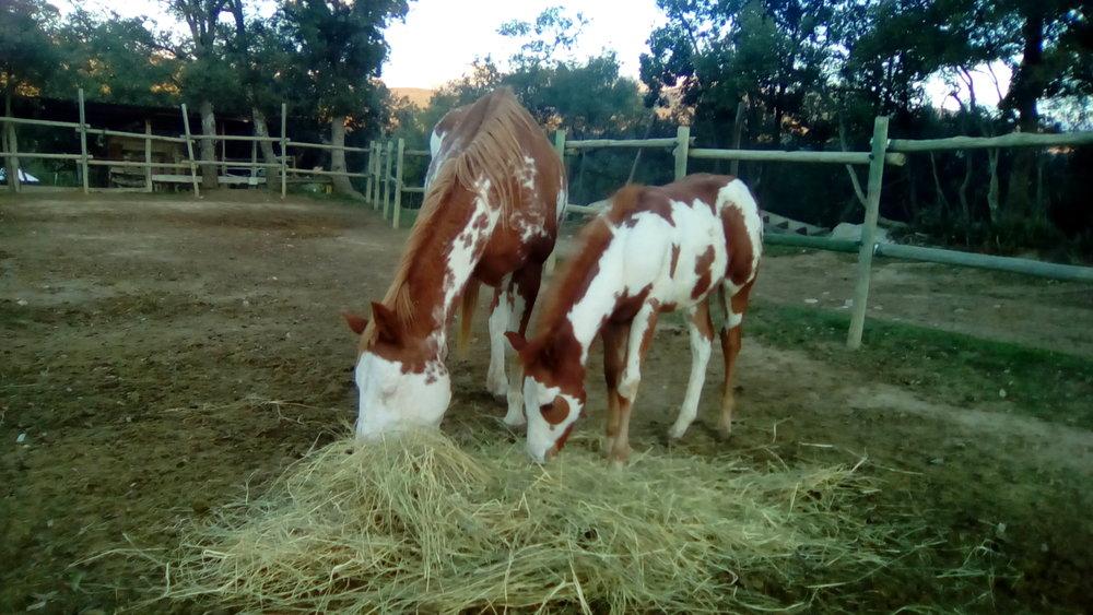 caballos hipica 2.jpg